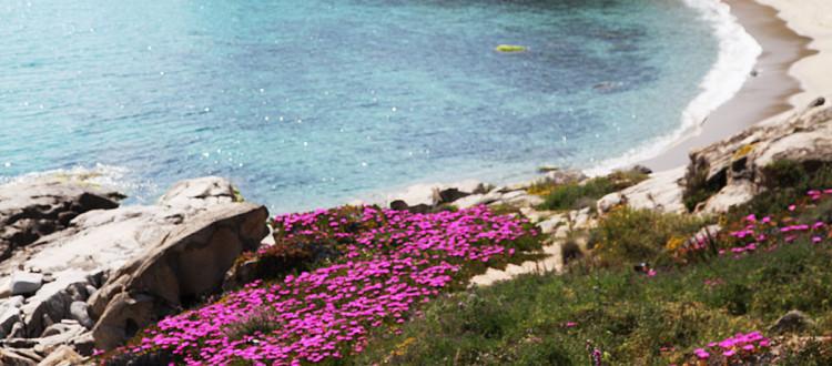Seccheto Isola d'Elba